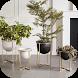 Interior Plant ideas