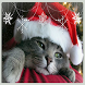 Cute Xmas Cat Live Wallpaper by First Class Wallpapers Free