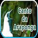 Canto da Araponga by legend of bird