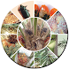 Oil Palm Pests Telugu