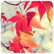 Autumn Photo Frames by PBC DEVELOPERS