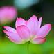 Phật Giáo Chính Tín by NguyenDoAnhKhoa