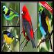 Canto de Pássaros Brasileiros by bedegapp
