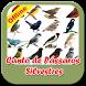 Canto do Pássaros Silvestres Offline by Tahu Bulat App
