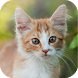 Suara Kucing Ringtone by KicauApp