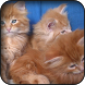 Cute Cats Wallpapers by HAnna