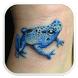 Frog Tattoo Designs by LynxApp