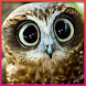 Owl Wallpapers by Andrian G