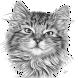 Cara Menggambar Kucing dengan Pensil by Kangmas Aan