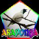 CANTO DA ARAPONGA (Procnias nudicollis) by legend of bird