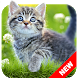 Cat Wallpapers & Kitten Backgrounds by ⭐ 7Fon Wallpapers