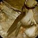 Suara Pemikat Burung Walet by semestadev