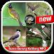 Suara Burung Kutilang MP3 by vinadroid