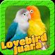 Lovebird Birds by Kicau Burung Juara No.1