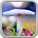 Mushroom Wallpaper by MasterLwp