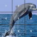 Kids Dolphin Slide Puzzle by Gaiel Soft