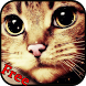 Kittens Pictures 1000 + by Reznic Software MD