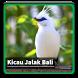 Kicau Suara Burung Jalak Bali by kangdeveloperstudio