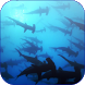 Shark 3D Video Live Wallpaper