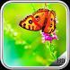 Butterfly Wallpaper by LegendaryApps