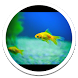 Hd Images Small Aquarium LWP by Sub Nation