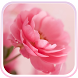 Pink Roses Live Wallpaper! by Live Wallpaper HD Studio