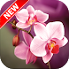 Orchid Wallpapers