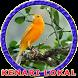 Master Kenari Lokal by Goodapps Project