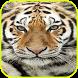 Nature Tiger wallpaper by Peanut