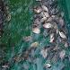 Belajar Budidaya Ikan Gurame by AlulaDev