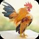 Suara Ayam by KicauApp