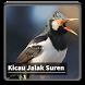 Kicau Suara Burung Jalak Suren by kangdeveloperstudio