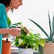 цветы и растения как ухаживать by BeautyClubDev