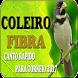 Coleiro Baiano by legend of bird