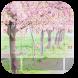 Cherry Blossom Season Keyboard by Designer Superman
