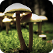 Mushroom Live Wallaper by GoldenWallpapers