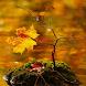Autumn Motives 2 Wallpaper by Zimin Adrian