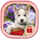 Husky Dog Locker Theme by Luxury App Lock Theme