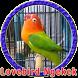 Masteran Lovebird Anakan by Goodapps Project