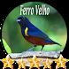 Canto de Ferro Velho by jonn jeff
