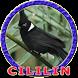 Master Burung Cililin