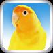 Master Kicau Lovebird by JSapp