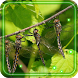 Dragonflies HD 2016 LWP by NEW BEST EUROPE