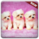 New Cute Little Puppies Wallpapers HD