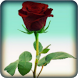 Rose Live Wallpaper by AdSoftech
