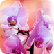 Orchid Flowers by My Book
