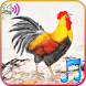 Funny Wake Up Ringtones by Tomato Music Studio
