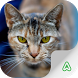 Cats Breeds Lite by Agrimind