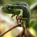 Chameleon video wallpapers by AlexAlerion