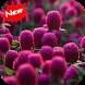 Globe amaranth by Seaweedsoft